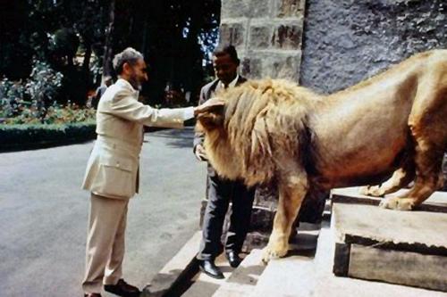 la historia del leon negro de etiopia