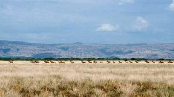 Parques Nacionales de Etiopía