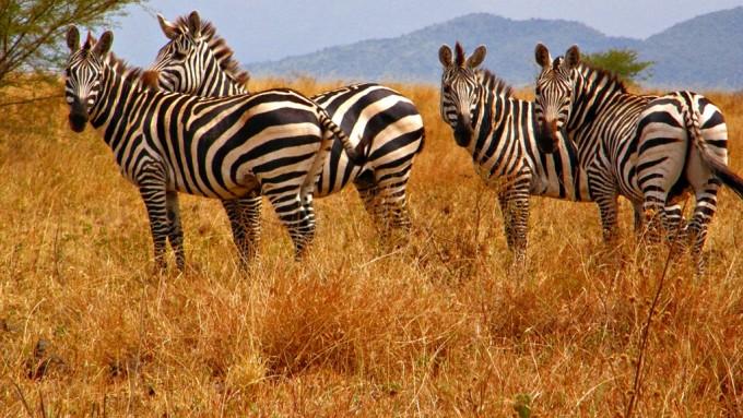 Parque Nacional de Nechisar