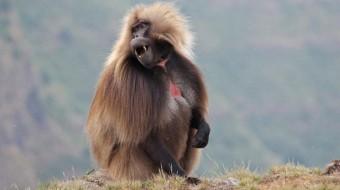 Viaje a Etiopía Norte y Sur 24 días